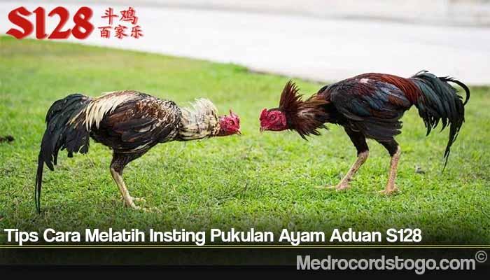 Tips Cara Melatih Insting Pukulan Ayam Aduan S128